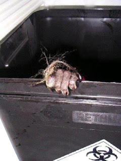 vivisezione crimine dell'umanità