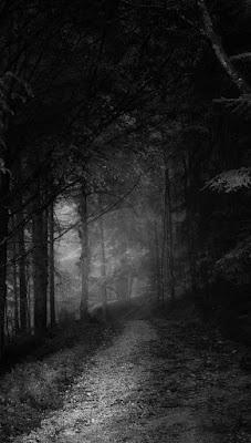 غابة سوداء اللون