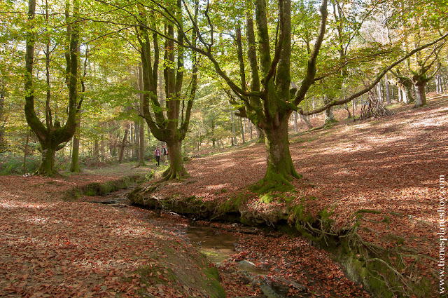 Hayedo de Otzarreta otoño viaje excursiones planes