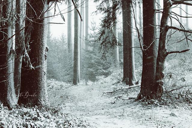 Sauerland, winter 2020