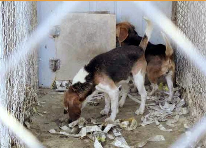 Four Legged Friends And Enemies 6 26 13 Aspca Uses Usda Photos In Fight Over Puppy Mills