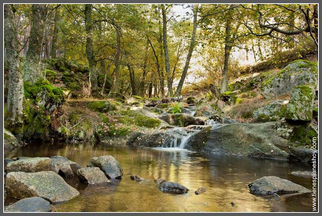 Abedular de Canencia en otoño