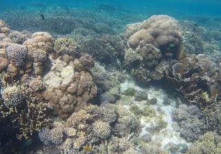 Pulau Siaba Besar. Parque Nacional de Komodo, Indonesia.