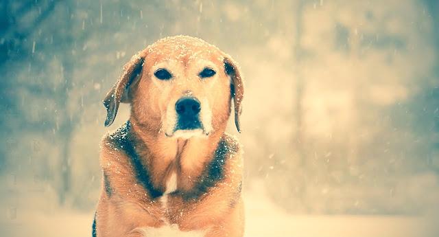 Dog In Rain Live Wallpaper Engine