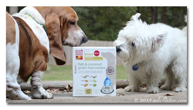 Basset and Westie nosing The Honest Kitchen's Brave recipe