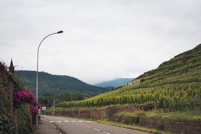 Visite des vignobles de Schlumberger à Guebwiller en Alsace