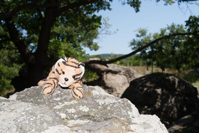 Tigris plüssállat a szentbékállai kőtenger szikláján