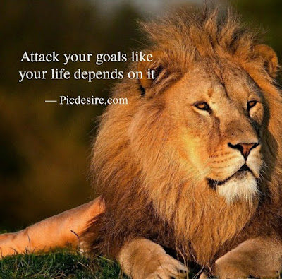 30 Motivational Lion Quotes for a Strong life
