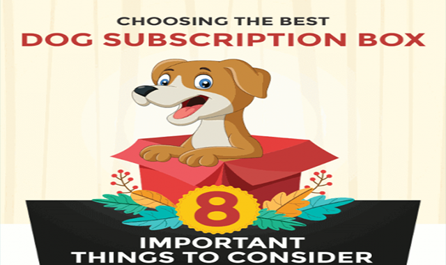 Choosing the Best Dog Subscription Box