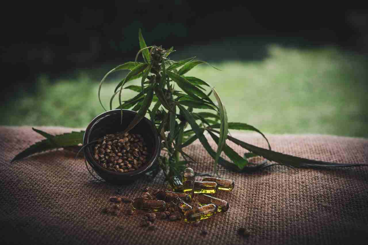 hemp-seeds-meaning-in-hindi