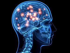 Meningkatkan Fungsi Saraf dan Kekuatan Otak