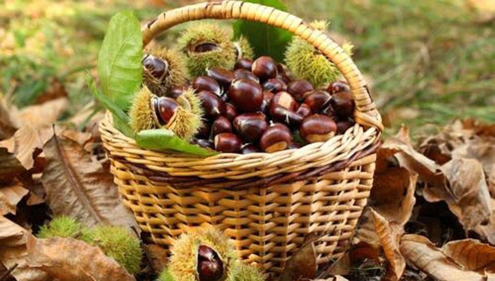 Στις 19-20 Οκτωβρίου η 3η Γιορτή Κάστανου στα Αμπελάκια