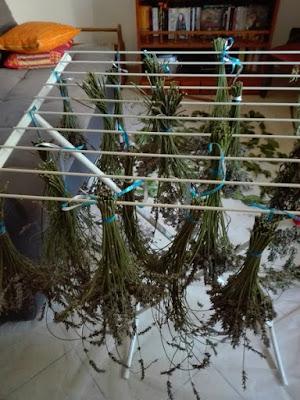 Luglio nell'orto: raccolto di lavanda
