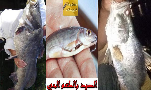 طريقة الصيد بالطعم الحي فى النيل