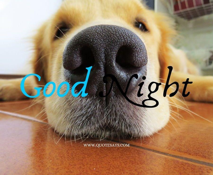 Good Night Dog showing nose