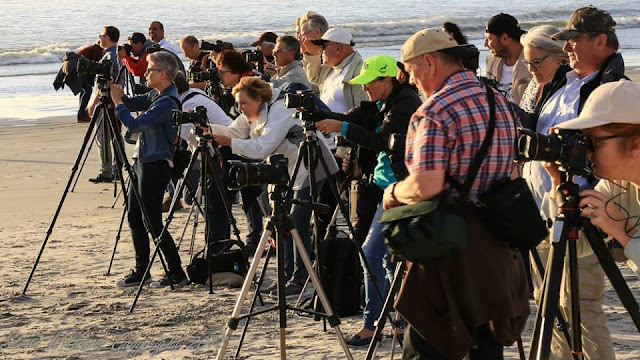 Delegates during a Landscape Practical Session on Milnerton Beach