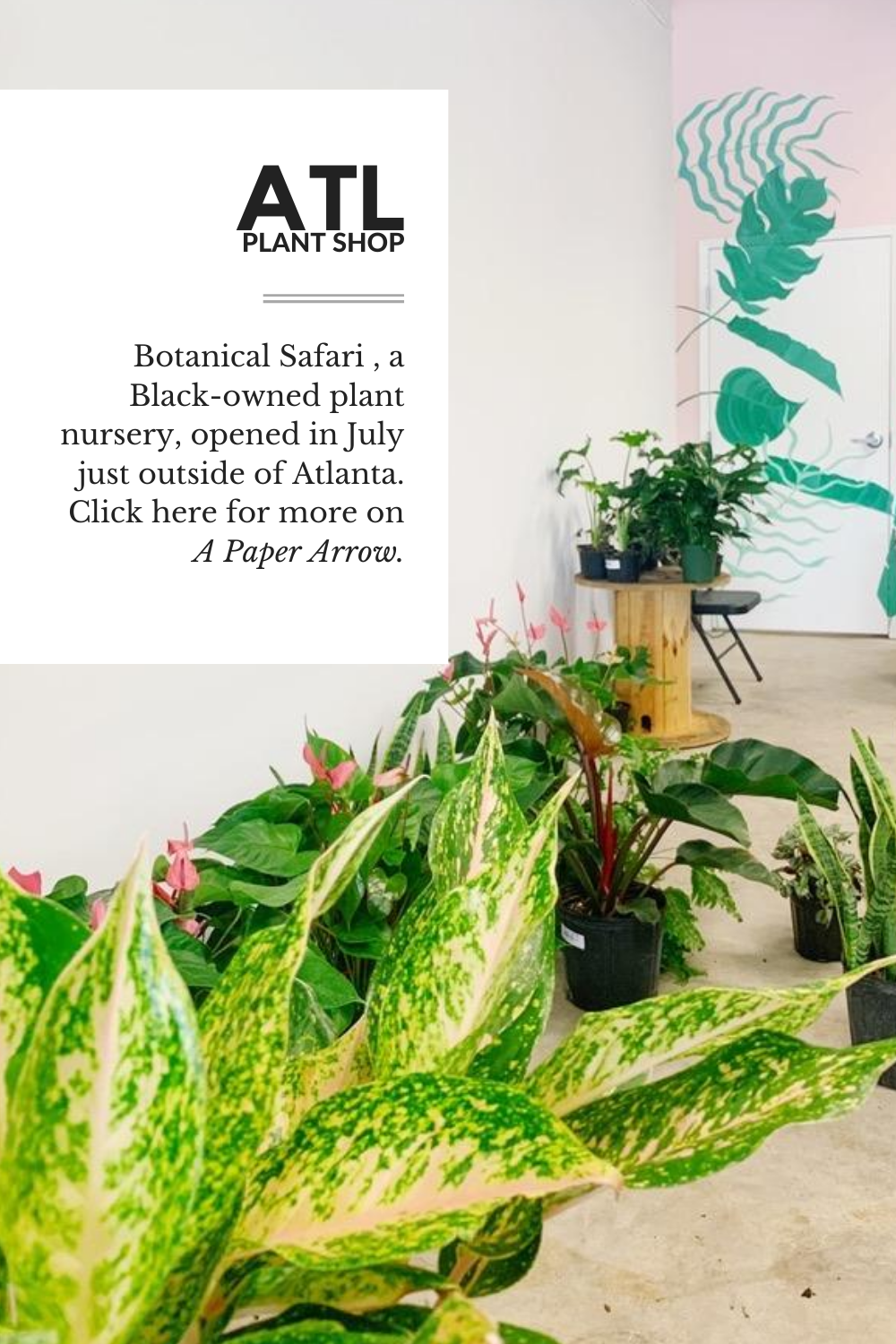 plant shop, plant nursery, black-owned, black business, shop black, buy plants