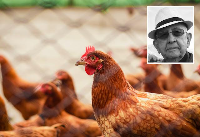 saudade jardim bem te vi galinhas passaros casa quintal carlos romero