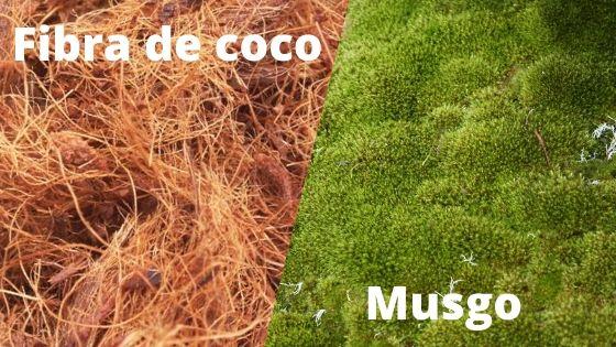 Exemplo com dois tipos de substratos para orquideas - fibra de coco e musgo