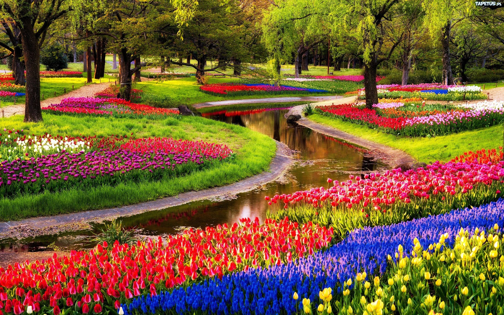 Красота парка Кекенхоф в голландии