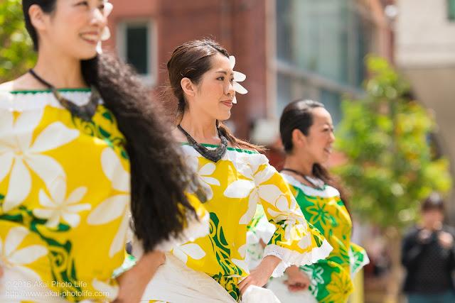マロニエ祭り、カハレフラ&タヒチスタジオの写真 6