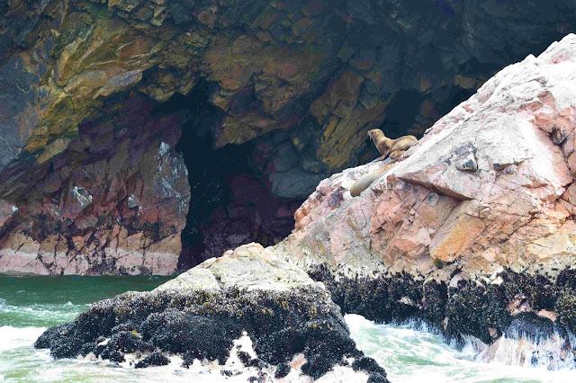 lobos marinhos em uma rocha no meio do mar