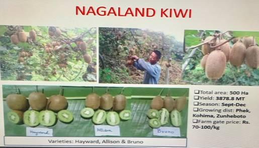 Value-Chain-Creation-for-Kiwi-Fruit