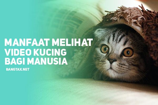 Berikut! Manfaat Melihat Video Kucing Bagi Kesehatan Mental Manusia