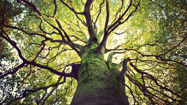 5 Lapisan Batang Pohon