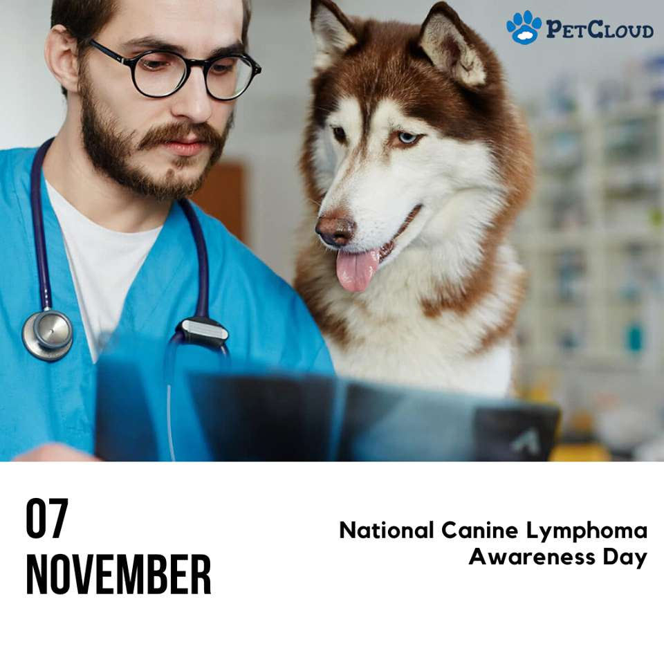National Canine Lymphoma Awareness Day Wishes Photos