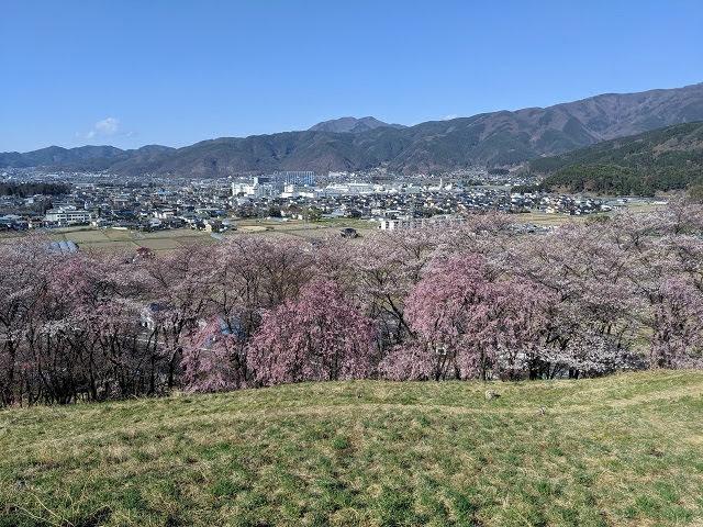Springtime in Japan: Cherry Blossoms on Koboyama (aka Mt. Kobo) in Matsumoto