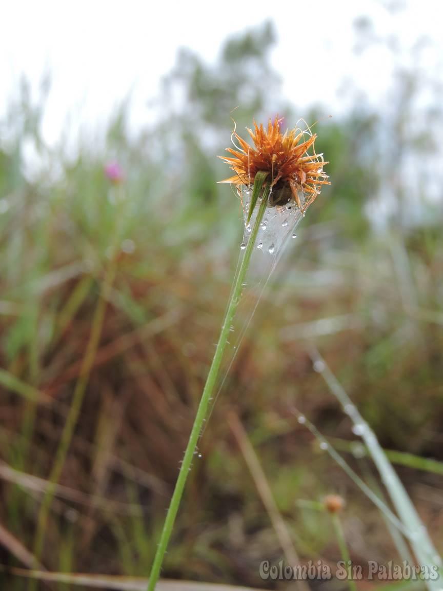 ramillete de solo una flor envuelto por telaraña