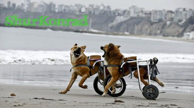 playas-perros- Argentina dog puppy cachorro ShurKonrad 3