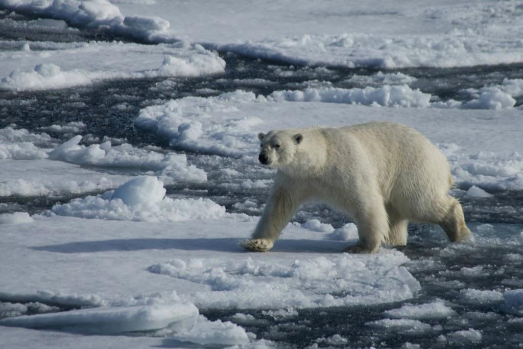 10 Gambar Global Warming Paling Menarik Perhatian