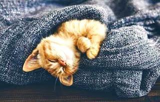 Heboh Wabah Corona di Cina, Puluhan Kucing Mati Mendadak di Karanganyar. Inilah yang Terjadi
