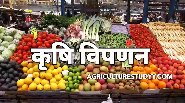 कृषि विपणन क्या है? ( Agriculture Marketing in hindi )