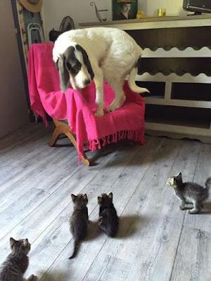 Dog Humor : Please help me