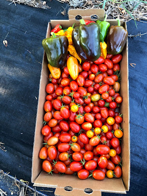cardboard flat of tomatoes with some green, chocolate, and yellow peppers