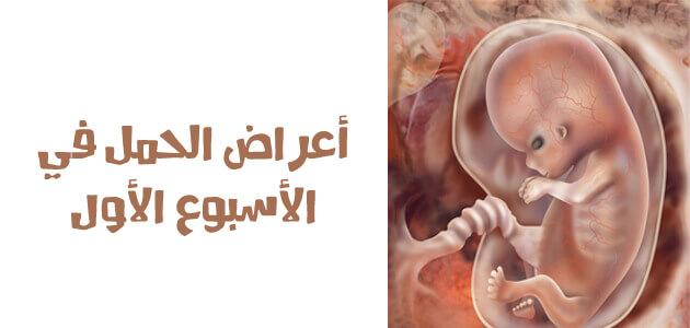 صورة لجنين في داخل بطن أمه