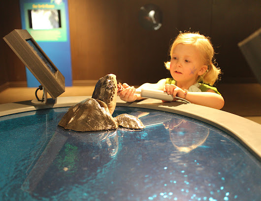 Exhibit Galleries Blog: Turtles Ready to Rescue!
