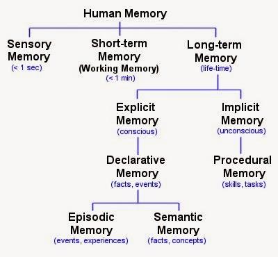 Memory Concept Map.Mr Cantor S Ap Psychology Blog Unit 1 Ch 7 Memory