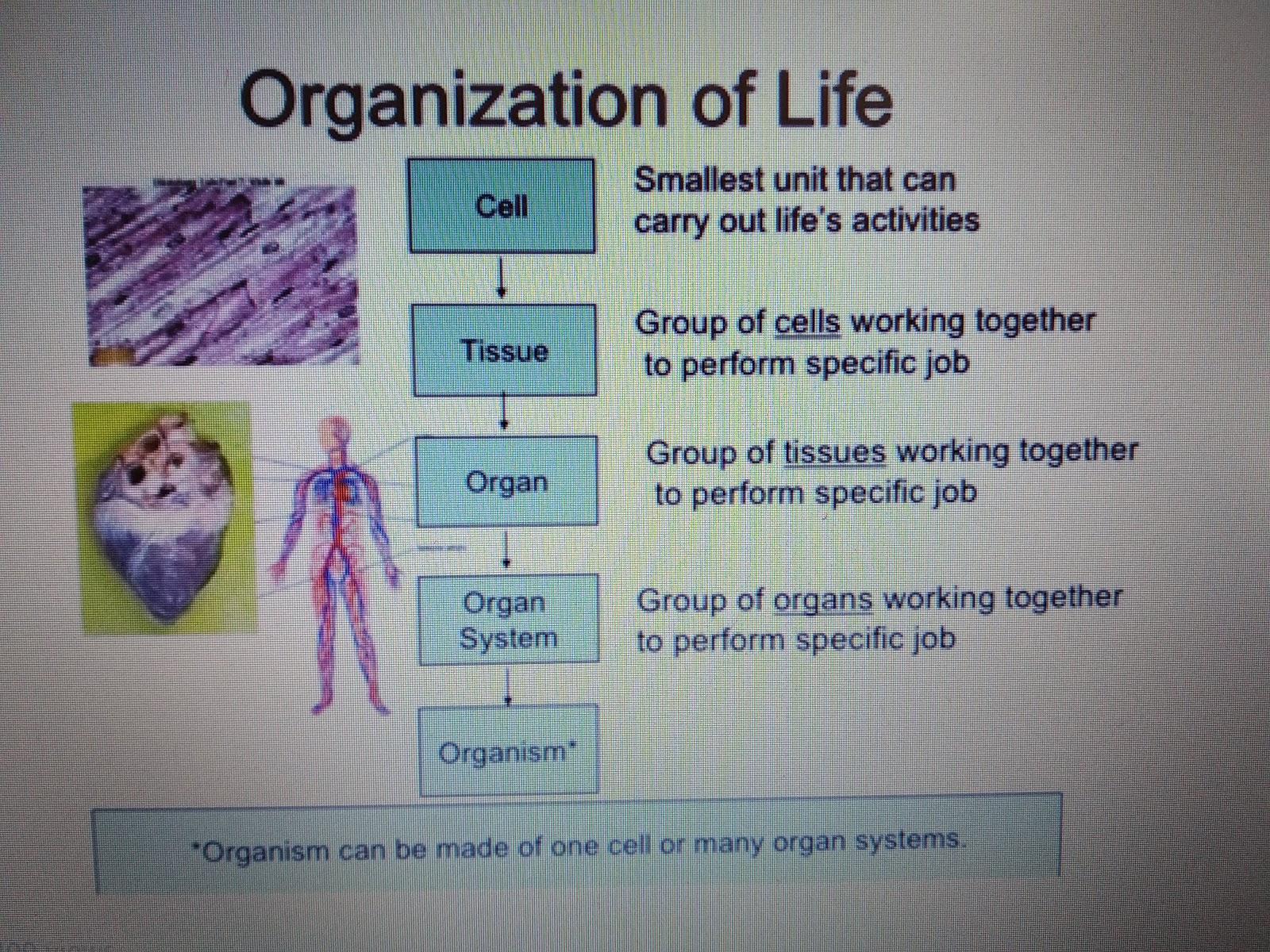 Natural Science Cell Tissue Organ System Organism
