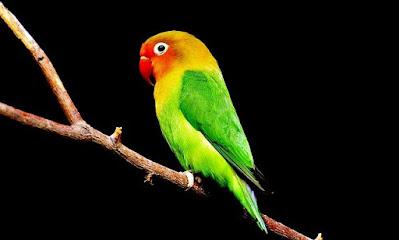 Information About Parrot In Marathi. पोपट पक्ष्याची माहिती