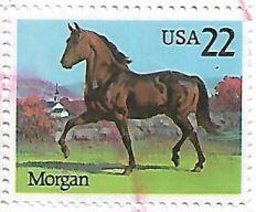 Selo Cavalo Morgan