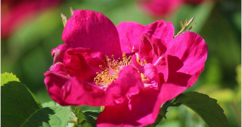 Unan maailma : Runon ja suven päivä