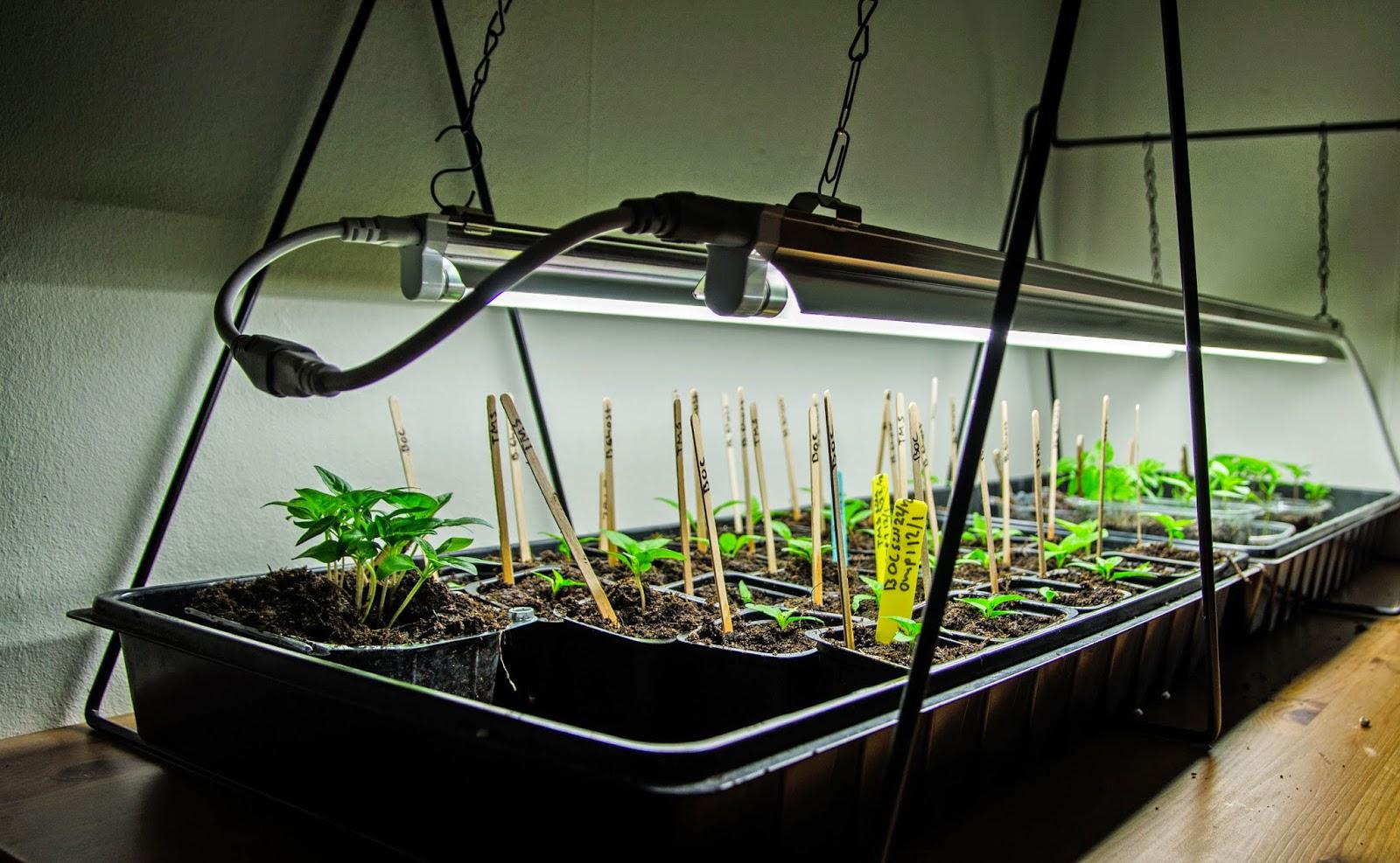 belysning till växter
