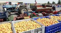 ΕΥΧΑΡΙΣΤΕΣ ΕΙΔΗΣΗΣ: Έχουμε ρεκόρ 10ετίας στις εξαγωγές φρούτων και λαχανικών