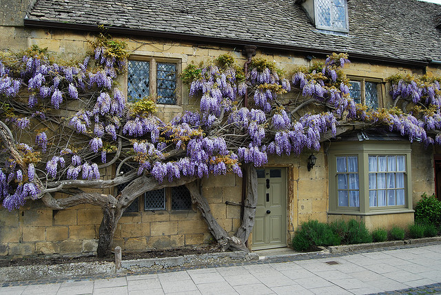 Try Dulux Lizard for this soft front door look with Cotswold Stone...don't forget the wisteria!