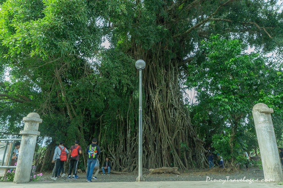 Balete tree of Maria Aurora, Aurora