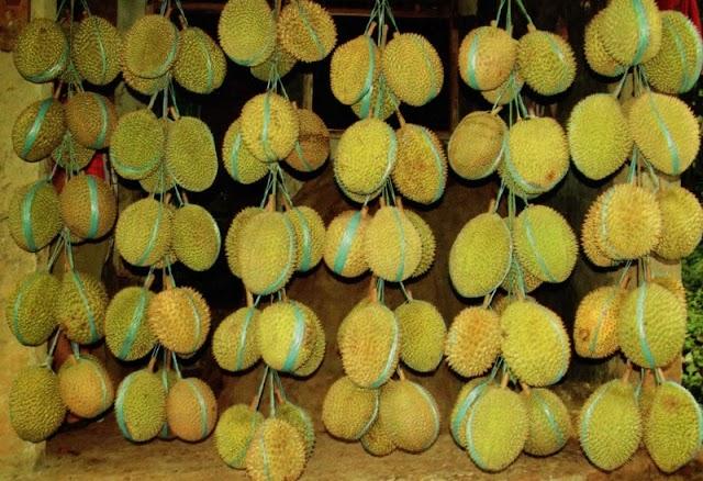 """Pesta Buah """"Kadu"""" Di Sentra Durian Serang"""
